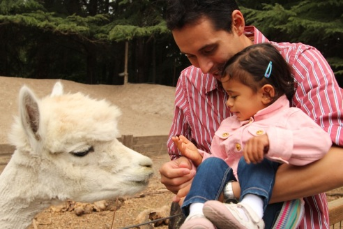 Feeding the alpaca that cared only for pellets
